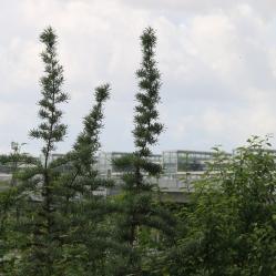 berlin-suedkreuz-bahnhof-sx011